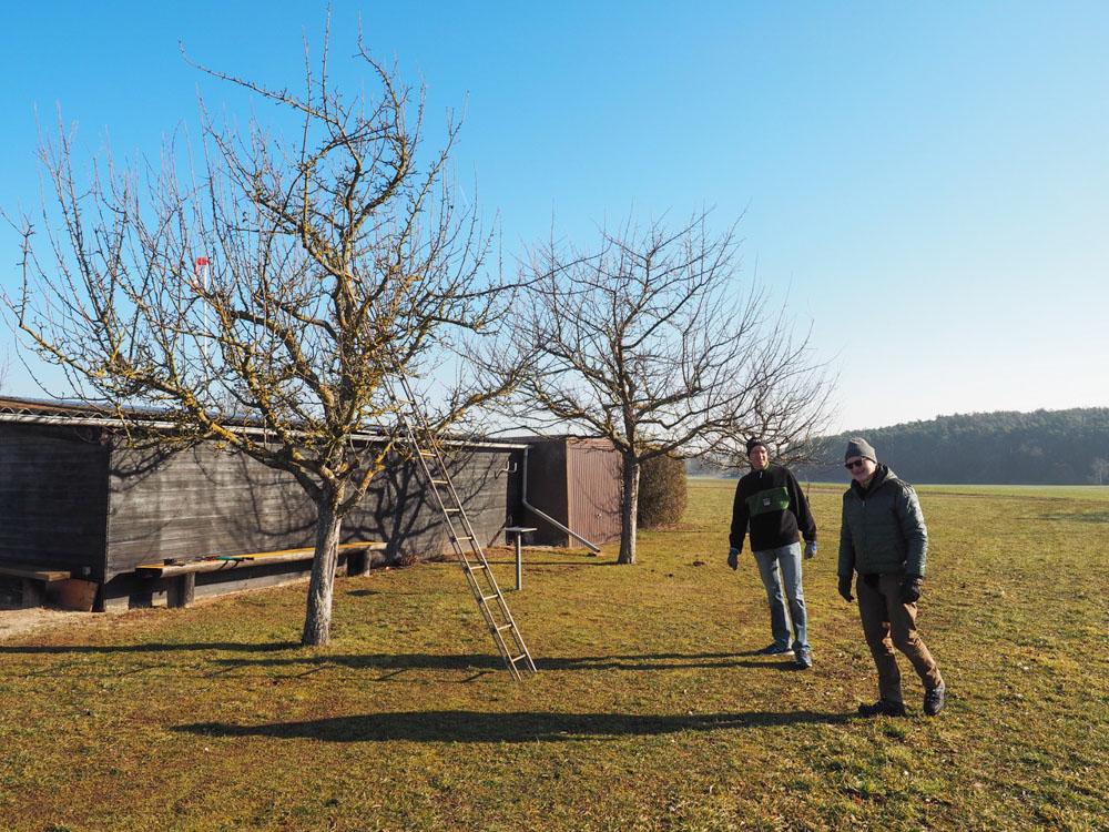 Baumschnitt im Februar
